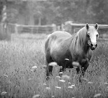 Horse  by Christine  Wilson Photography
