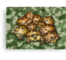 Greek Tortoise Group on Green Camo Canvas Print