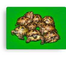 Greek Tortoise Group on Bright Green Background Canvas Print