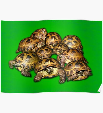 Greek Tortoise Group on Bright Green Background Poster