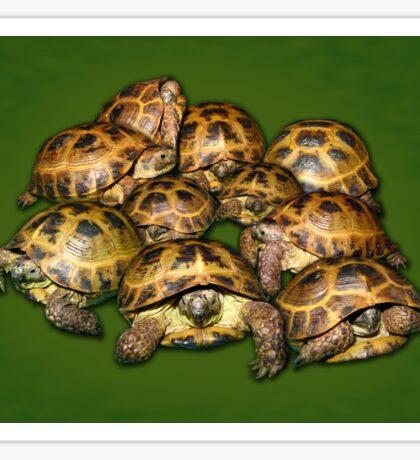 Greek Tortoise Group on Darn Green Background Sticker