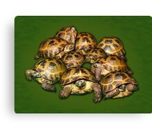 Greek Tortoise Group on Darn Green Background Canvas Print