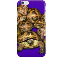 Greek Tortoise Group on Purple Background iPhone Case/Skin