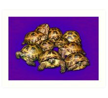 Greek Tortoise Group on Purple Background Art Print