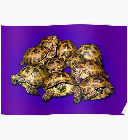 Greek Tortoise Group on Purple Background Poster