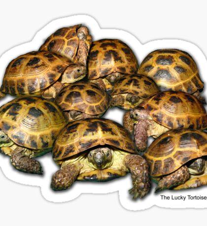 Greek Tortoise Group Sticker