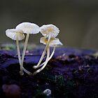 Tiny Fungi by Keren Smithies