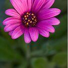 Bloom by Werner Padarin