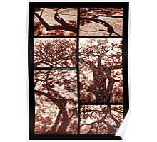 African Shadow Trees Poster