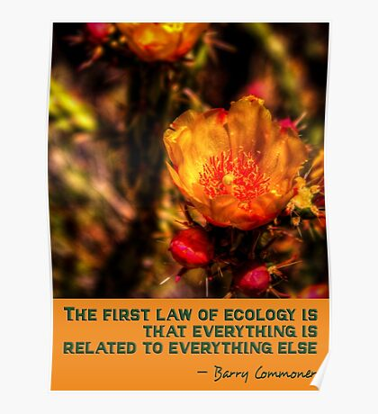The First Rule of Ecology Poster