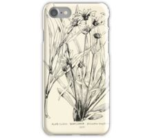 Southern wild flowers and trees together with shrubs vines Alice Lounsberry 1901 172 Sunflower iPhone Case/Skin