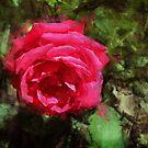 La vie en Rose by jean-louis bouzou