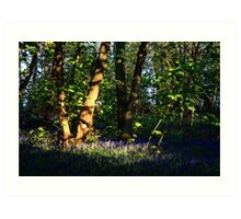 Bluebell Woods Art Print