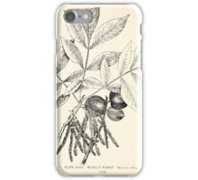 Southern wild flowers and trees together with shrubs vines Alice Lounsberry 1901 036 Woolly Pignut iPhone Case/Skin