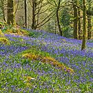 Rusland Woods in Spring by Jamie  Green