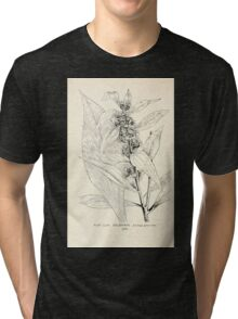 Southern wild flowers and trees together with shrubs vines Alice Lounsberry 1901 168 Goldon Rod Tri-blend T-Shirt
