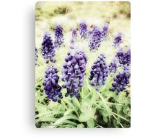 Grape Flowers Canvas Print