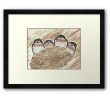Barn Swallow Chicks Framed Print