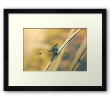 The Dragon's Roost Framed Print