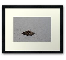 Southern Old Lady Moth Framed Print