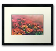 Fields of Warm Petals Framed Print
