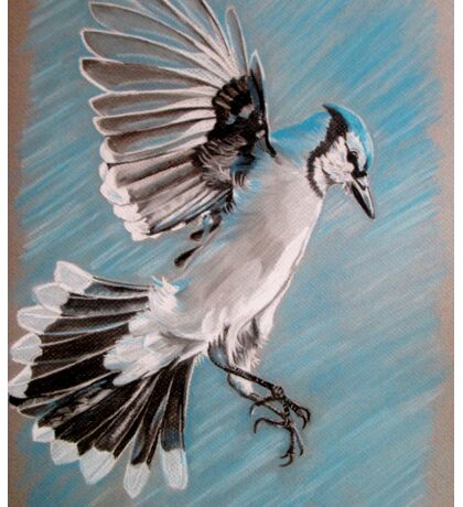 """Blue Jay"" Sticker"