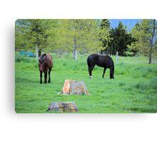 Spring Pastures Canvas Print