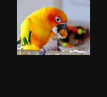 An Orange Feast - Sun Conure  Tank Top