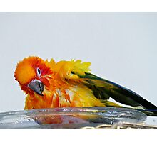 A Bath With A Smile - Sun Conure  Photographic Print