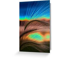 Grass Sunset Greeting Card