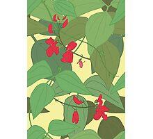Scarlet runner beans pattern 1 Photographic Print