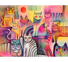 Cats galore Photographic Print