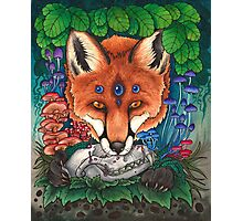 Undergrowth - Red Fox Photographic Print