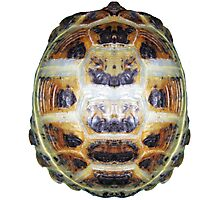 Tortoise Shell - Carapace Photographic Print