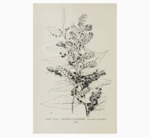 Southern wild flowers and trees together with shrubs vines Alice Lounsberry 1901 125 Catesby's Leucothoe Kids Tee