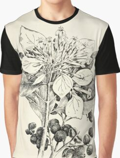 Southern wild flowers and trees together with shrubs vines Alice Lounsberry 1901 157 Georgia Bark Graphic T-Shirt