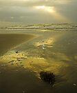 Padre Island, Texas by Tamas Bakos