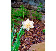 KE Garden Study 2  Photographic Print