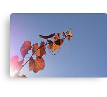 Vine in the Sky Canvas Print