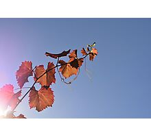 Vine in the Sky Photographic Print