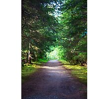 An Alaskan Forest  Photographic Print
