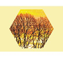 Nature and Geometry - Trees and Sunset Photographic Print