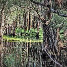 The Mangroves by wallarooimages