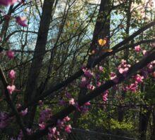 Dogwood Blossoms 2 Sticker
