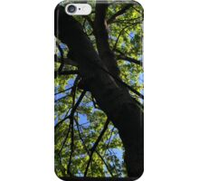 Looking up through the branches iPhone Case/Skin