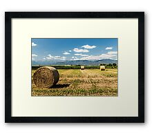 hay bales in the field Framed Print