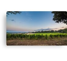 evening in the vineyard Canvas Print