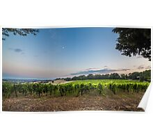 evening in the vineyard Poster
