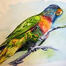Rainbow Lorikeet by Alison Gilbert