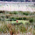 Little fox heading home  by widdy170